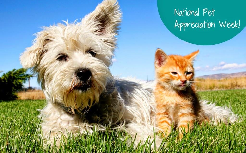 National Dog Show Program